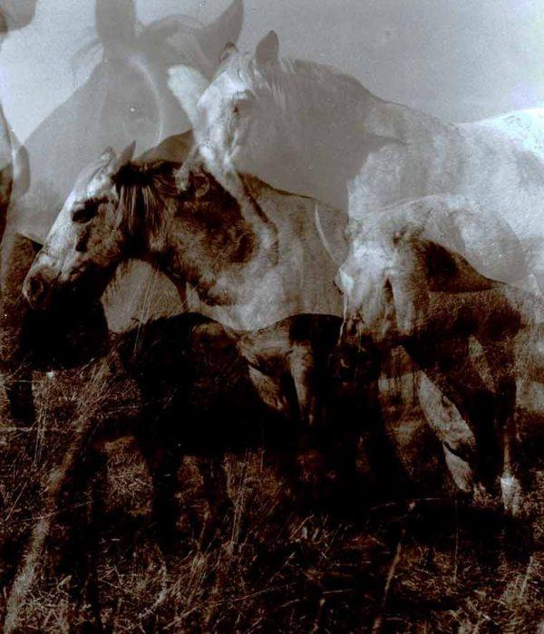 01_Photographs_Horses_1_760x900